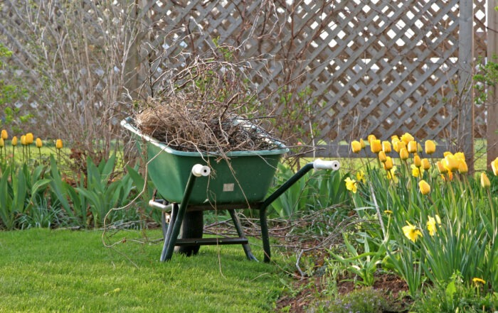 backyard spring cleanup